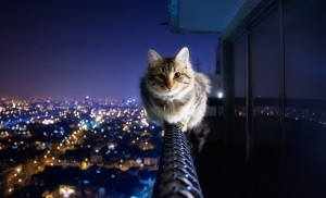 cat-has-no-fear-of-heights-big